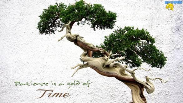 bonsai-2-wallpaper-1600x900